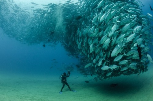 Scuba An awesome courtship swarm of Bigeye fish  (via David and Goliath - National Geographic Photo Contest 2012 - National Geographic)