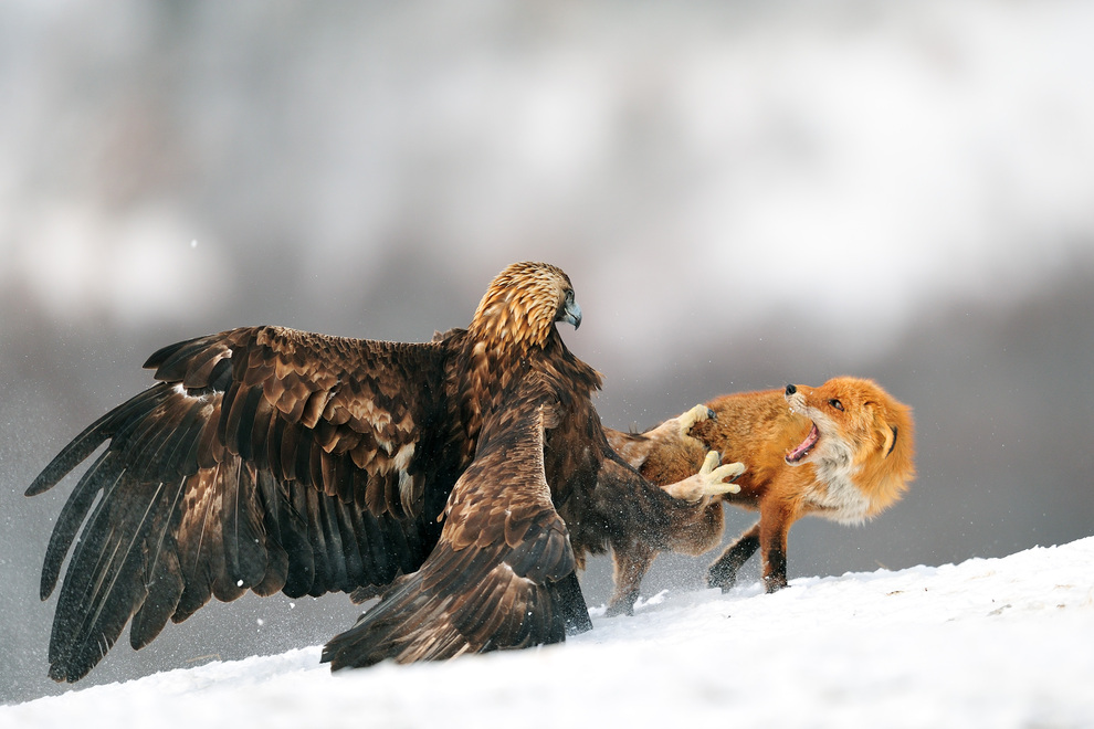 Camp and Hike Eagle vs Fox!! Bulgarian style,