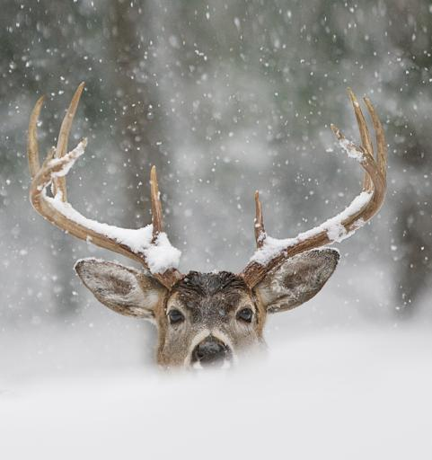 Hunting Check out some late-season deer hunting tips and strategies from Outdoor Life magazine here: http://bit.ly/11Pimnc