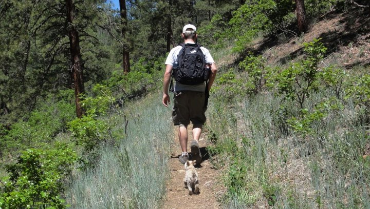 Camp and Hike We love when furry friends join in on adventures! Do your dogs *like* to explore with you??