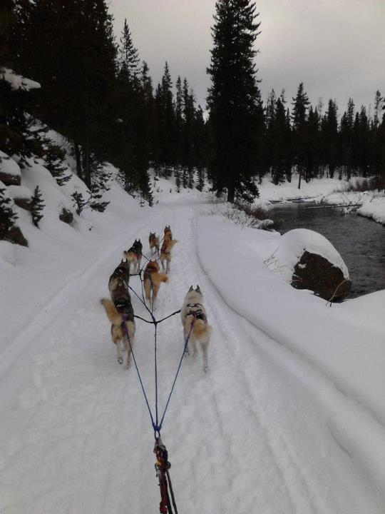 Camp and Hike Have you ever been dog sledding? If not, would you try it?  Great photo, April Cox! http://stp.me/SYAP -Nick