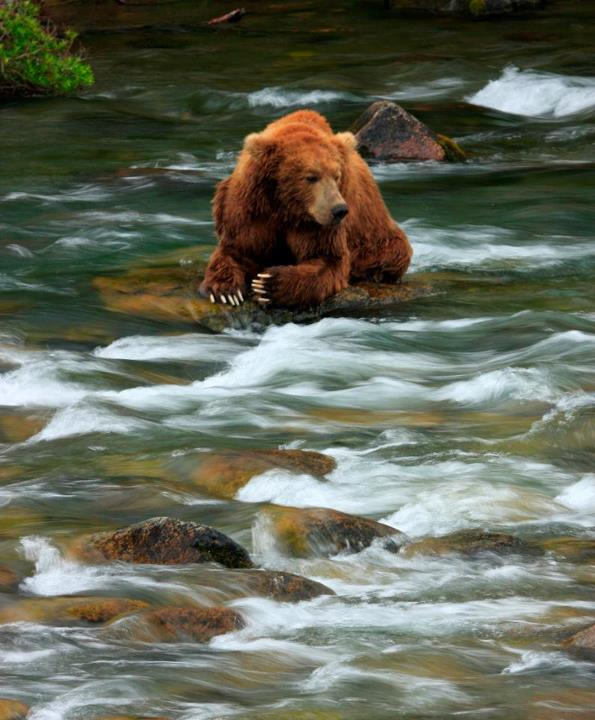 Have you ever seen a bear in the wild? Where? Were you scared? (Fan Renee Wickman did! Amazing, right?) -Juliette