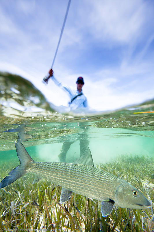 Flyfishing Angler Geoff Mueller lands a nice Bahamian bonefish at Abaco Lodge