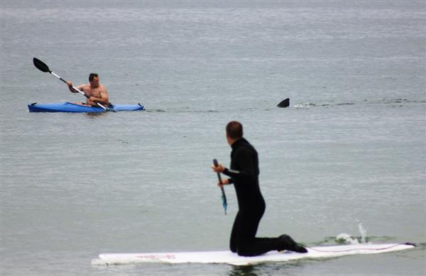Surf Week in Review: Nudity AND sharks in one week?! Jackpot. http://bit.ly/SglGDf