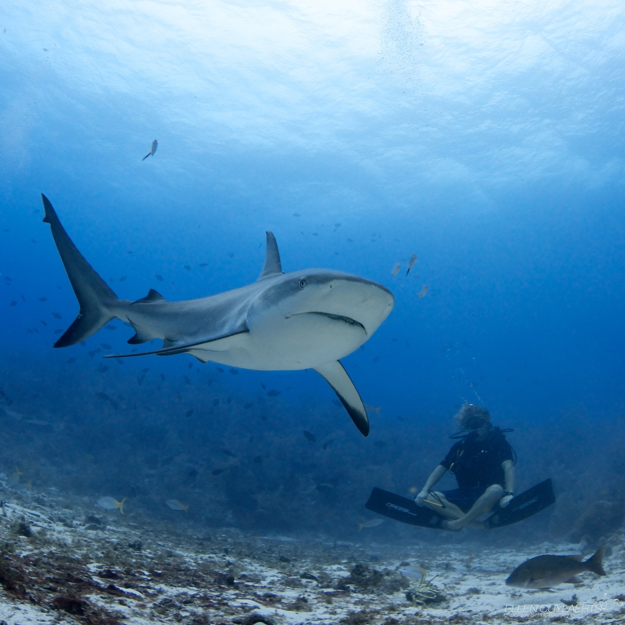 Scuba Sharks are very shy, so the best way to observe them is to get your breathing low, keep calm and enjoy!