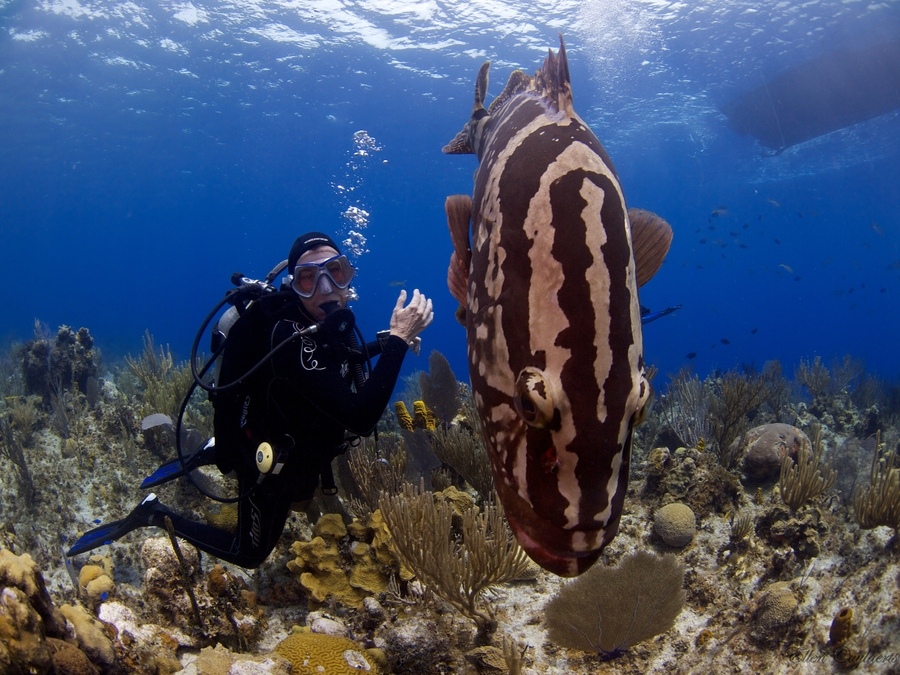Scuba Posing with a grouper on a trip to Little Cayman