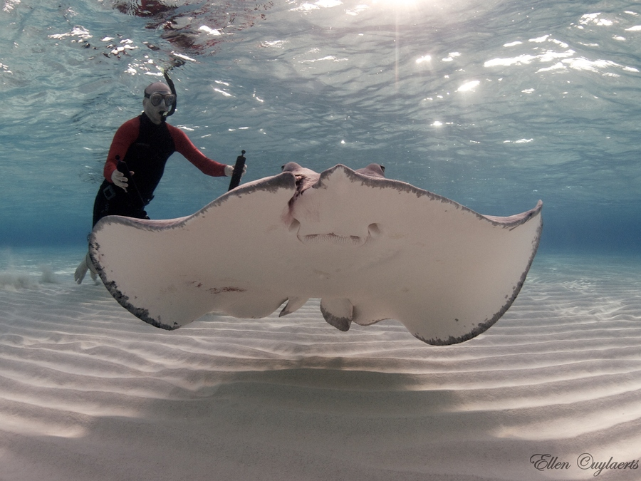 Scuba Ray catching rays off Cayman Island