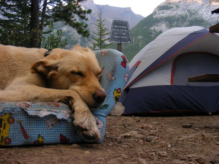 Camp and Hike Ok. Cuteness radar just reached epic. Do you bring your dogs camping? Do they sleep outside or in the tent squashed  next to you taking up all the room?