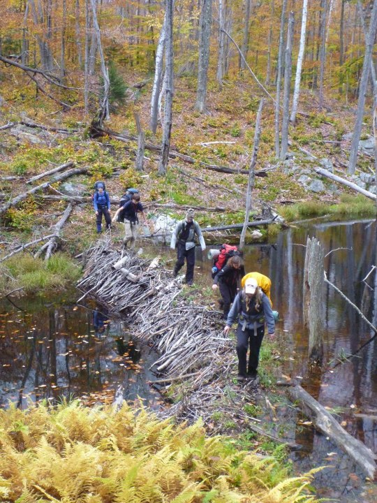 Camp and Hike Heres a picture of a group of adventure sports students crossing a beaver dam high in the mountains of Pharoah lakes wilderness area in the Adirondacks.
