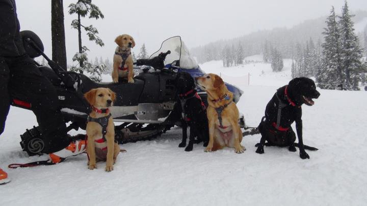 Ski A big thanks to the Mt. Bachelor Avalanche Rescue Dogs for letting us spend some time with them today. 