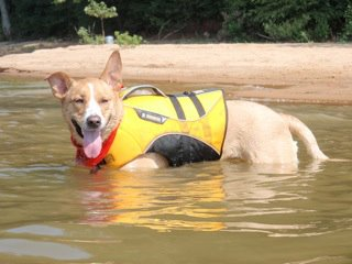 Camp and Hike This is Layla, a Carolina Dog, relaxing in Lake Hartwell in Clemson, SC.