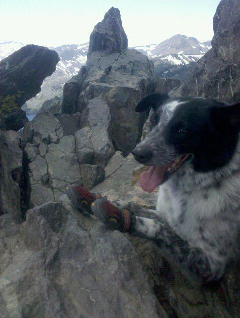 Camp and Hike In this photo, Cooke is enjoying the view from the top of Mt. Tallac in South Lake Tahoe. Her Ruff Wear boots protected her paw pads from course granite rocks and allowed her to enjoy the hike without injury!