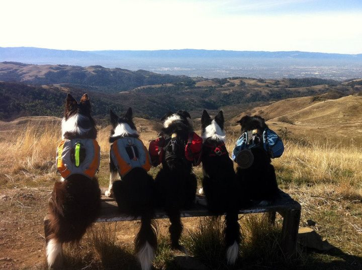 From left to right Rampage and Icon (Singletrack Pack), Derby (Palisades pack), Cassidy (like a true girl she makes the boys carry her hiking gear) and Tricki Woo (Approach Pack).   The photo was taken after the first climb of a 22 mi day hike.  The city