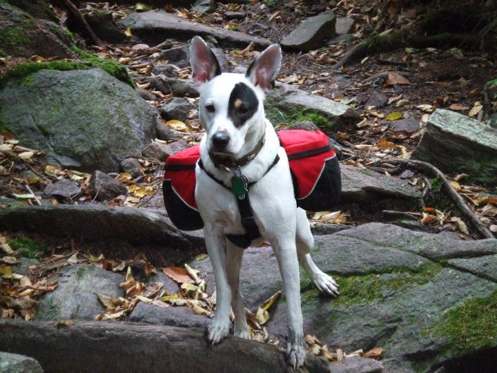 Camp and Hike Opi on a recent hike on the Appalachian Trail around the Mt. Rogers area in Virginia. We went on our first three day back packing trip and Opi carried his own food and supplies. The pack fits great and we had a great time on the trail even though we got s