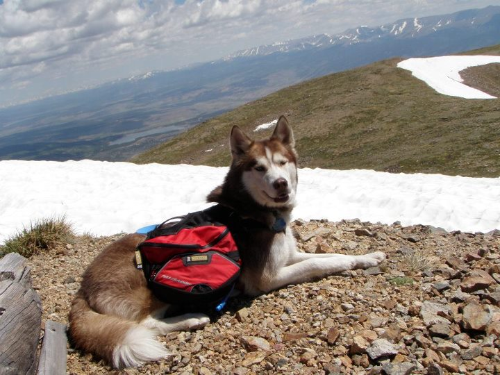 Jack on the summit of Quail Peak in Colorado