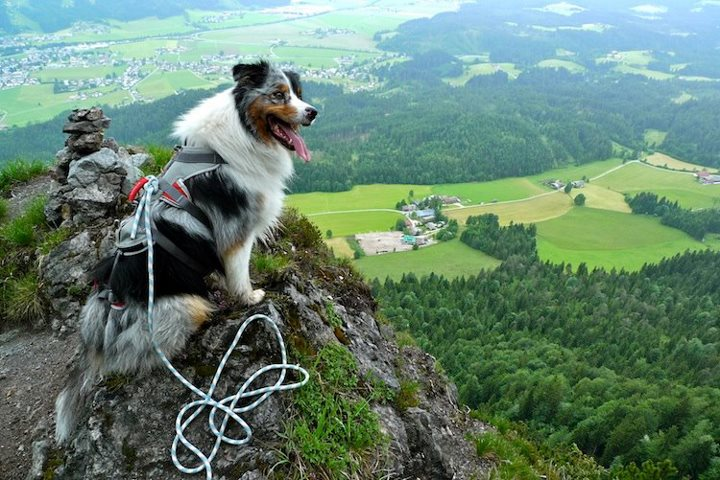 Climbing Tamba, our climbing partner on four paws - in Austria, Tyrol.