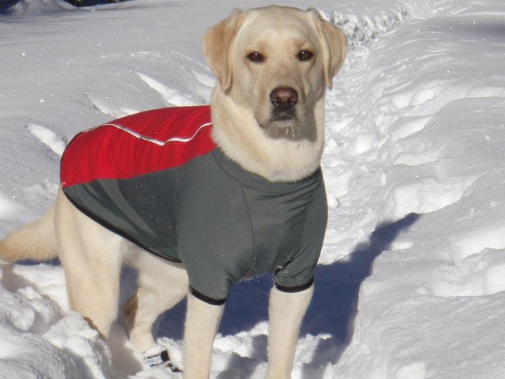 "Camp and Hike This is ""Maggie"" – our 6 year old lab.