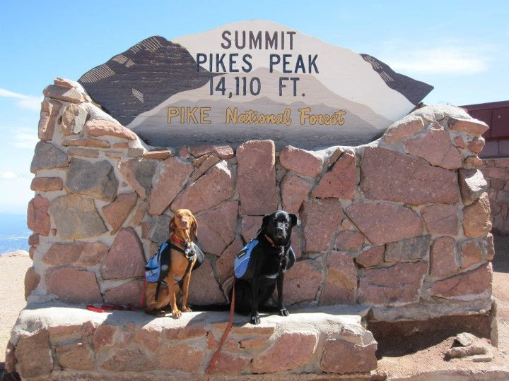 Camp and Hike This is Frankie (Vizsla) and Bono (lab mix) after hiking up Pikes Peak from the Crags with their Approach Packs on.  They love hiking 14er's!