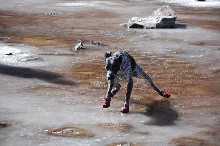 Camp and Hike Porota, from Chile, doing ice skating with her Bark'n Boots, on a frozen lagoon in Chilean Mountains