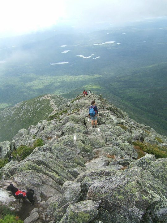 Spanky, a 10 lbs Chihuaha-Black Labrador Retriever mix takes on Mount Katahdin, Maine. He started at the base, took the Hunt Trail to the summit, and back down without skipping a beat. His Web Master harness helped get around the 7 ft drops/climbs only ac