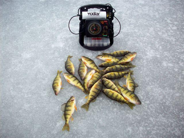Fishing Ryan Hale put a few Iowa perch on the ice!