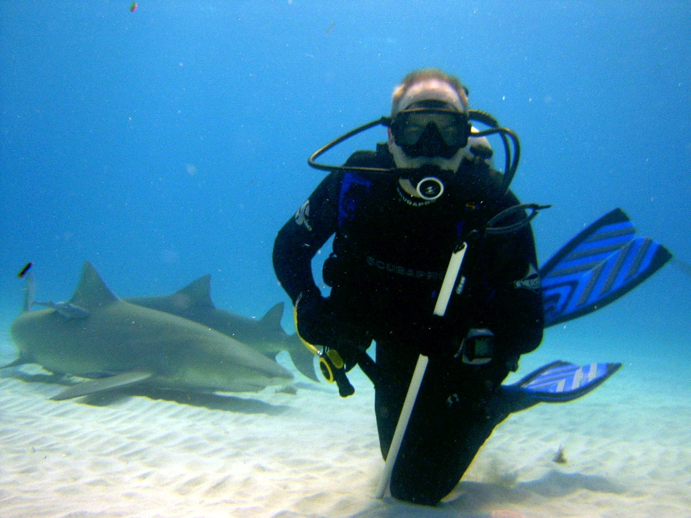 Scuba With the Lemon gang in the Bahamas...