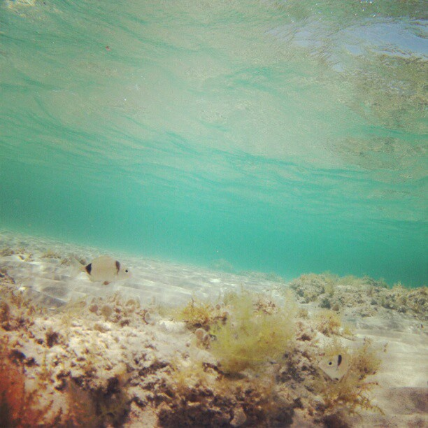 Scuba Photo by tomashavel. http://instagram.com/tomashavel