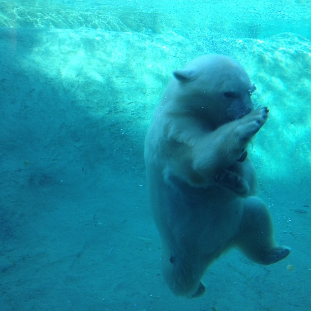 Entertainment - Beware: this polar bear knows kung-fu