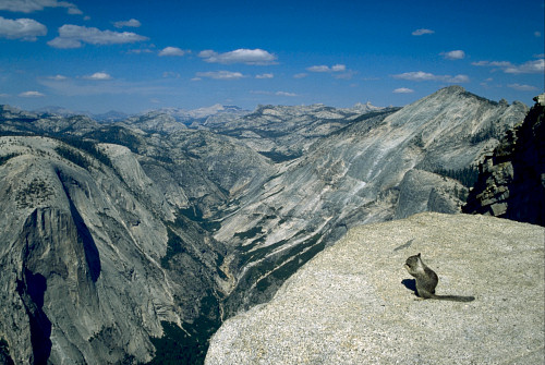 Climbing Summit of Half Dome with some hungry squirrels