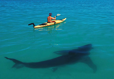 Kayak and Canoe I can hear the jaws music playing..