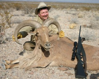 North American wild sheep. Hunting these= at least 15k..ouch!