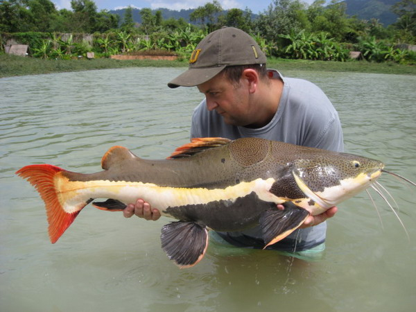Fishing Ever seen a Redtail catfish?