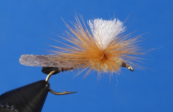 Flyfishing Golden Stone