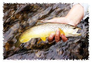 Flyfishing in Wisconsin's St. Croix and Pierce counties, are some of the finest trout streams in the Midwest