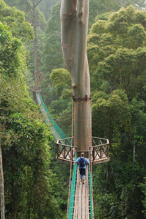 Camp and Hike Treetop canopy walk in the Borneo Rainforest in Indonesia