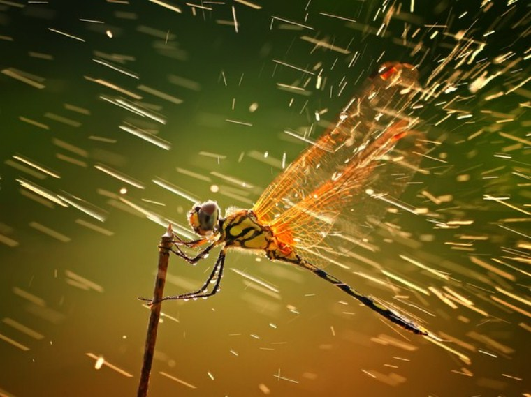 Extreme dragonfly's experience of bracing itself against the weather