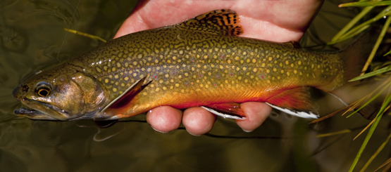 Flyfishing Trout in the Tribs: How to Fish a Stream in Early Spring