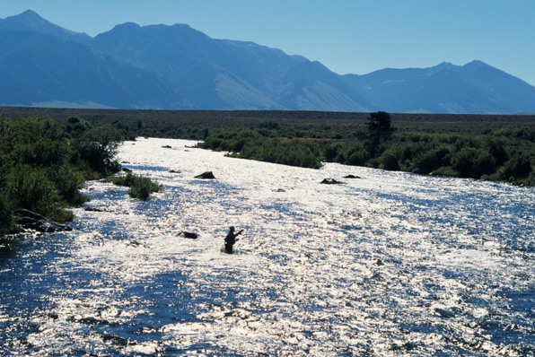 Flyfishing Close to Yellowstone National Park, the Madison River features wild rainbow and brown trout that hide out amidst its islands, eddies, and undercut banks