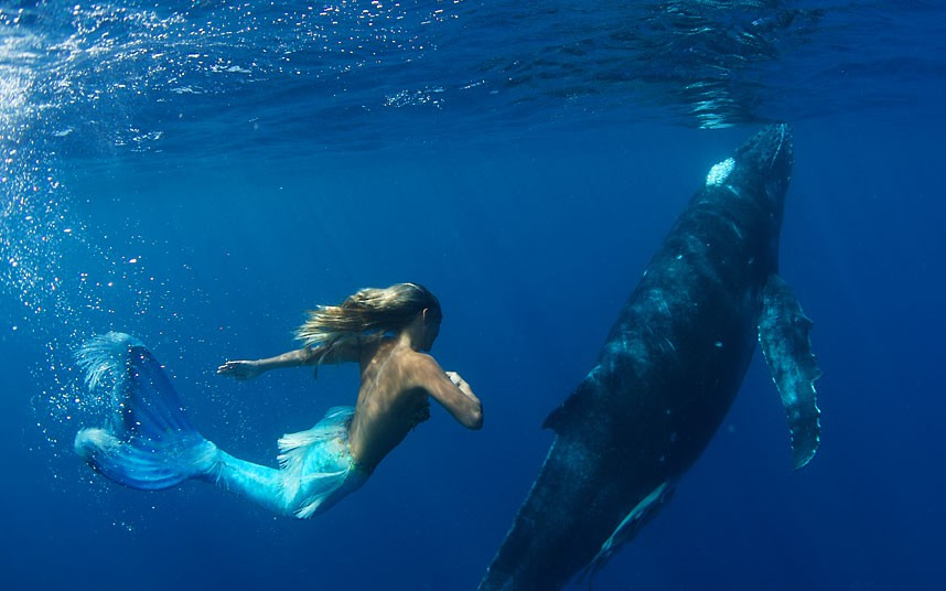 Scuba Hannah Fraser swims dressed as a mermaid with a humpback whale off Vava'u Island, Tonga, to raise awareness of marine life and oppose whale hunting...
