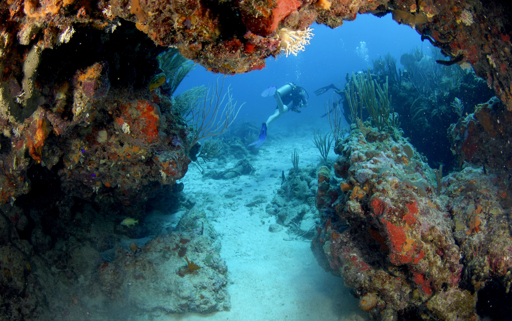 Scuba cool dive in BVI