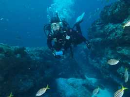 Scuba Scuba Diving Shellharbour