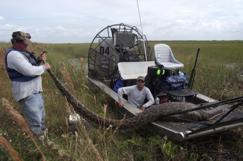 Hunting Burmese Pythons in the Everglades