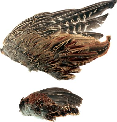 Hunting Off-season preparation is the key to maximizing precious hunting time with your dog. Freeze-dried quail wings help cut down on botched coveys by introducing and teaching quail scent. Use independently, with training dummies or on a string; for honing retrieve and pointing style. Available: 2 pk. or 6 pk. Size: 2 PACK. Type: Bird Training Accessories. - $6.99