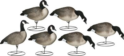 Hunting Virtually indestructible and soft, these decoys are made of an advanced EVA-blend plastic that has such incredible paint retention, it keeps these decoys looking lifelike for years of trouble-free use. These one-piece decoys boast flocked heads and tails for attention-grabbing realism. Six-pack includes three feeders (27L x 9.5W x 9.5H), two actives (22L x 9.5W x 13H) one sentry (24L x 9.5W x 15H) and six Wind Walker motion bases. Type: Canada Goose Decoys. - $159.99