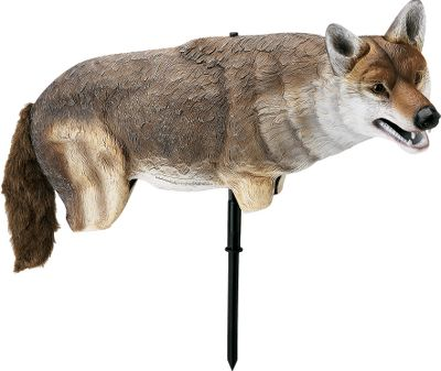 Hunting Bring them in close with this life-sized, lightweight coyote decoy. Single stake allows for easy and quick setup. The swiveling decoy and its free-moving furry tail make it believable. Color: Coyote. - $54.99