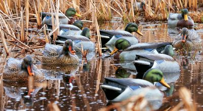 Hunting Created from carvings by decoy artist Marty Hanson, these Final Approach Gunner HD Floating Gadwall Duck Decoys incorporate flawless detail with vivid, custom-quality paint schemes. The paint makes the decoys highly visible and is incredibly durable. Each decoy has intricate, lifelike feather texture and a host of natural head positions to mimic wild birds.Three drakes and three hens with differing head positions. Weighted keels. Drakes are 14 x 14. hens are 14 x 14. Per 6. Color: Natural. Type: Gadwall Decoys. - $64.99