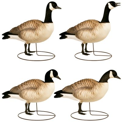 Hunting These lifelike decoys duplicate Lesser Canada geese, right down to their stubby beaks. They're smaller, lightweight, easier to carry and add realism to your spread. Sculpture Flock detail in the neck, head and tail makes them indistinguishable from custom decoys. The Dura-Connect head-attachment system handles the abuse decoys get during the season. The Snap-Loc Whisper Motion System base conveniently and easily locks the body in place during blustery conditions or allows the decoy to move freely with a lifelike motion in lighter breezes. Includes one each: sentry, stretching, resting and squawker head styles. Per 4. - $109.99