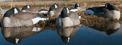 Hunting The quality and realism of original GH shell decoys in a relaxed, incredibly realistic sleeping pose. Their stackable, one-piece design is incredibly durable and makes setting a big spread easy. Raised-feather detail and jet-black painted heads and tails make them dead ringers for live geese. Per 6. Made in USA. Approximate dimensions: 30L x 12H.Available: Magnum - 30LStandard - 24L. - $69.88