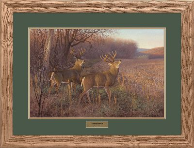 Hunting Wildlife prints of this exceptional quality and price are truly a rare find, and make an excellent gift for any sportsman or art aficionado. Meticulously produced from the original works by renowned artist Hayden Lambson, these prints capture all the grace and charm of North Americas most endeared wild animals. Each comes with gallery glass, archival-quality double matting, a complementing solid-oak frame and a brass nameplate. Each is signed and numbered by Lambson. Limited-edition prints. 27 x 35 framed. Available: Forgotten Stand. - $99.99