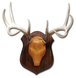"Hunting Now you can mount your deer or elk antlers with professional results at a fraction of the cost. These simple-to-use mounting kits include everything you need to complete a handsome wall mount of a small or large deer. Also includes a coupon to receive a 1"" x 3"" brass trophy plate, with up to three lines of lettering for $3.50 postage paid. Kit includes: Antler form, top-grain leather, template, sodium bicarbonate, paper mache, glue, screws, hanger and walnut panel.Available: Small Deer - 10"" x 13"" Large Deer - 12"" x 16"" - $39.88"
